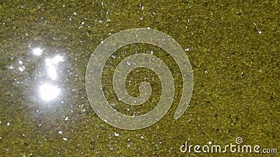 Luce solare nella caratteristica di vetro dorata dell'acqua video d archivio