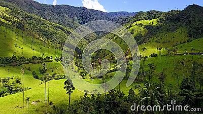 Luchtmening van Cocora-Vallei en zijn waspalmen boscolombia stock videobeelden