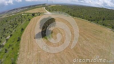 Luchtmening van eenzame boom op het gebied, symbool van vruchtbaarheid, essentiële vonk, wijsheid stock footage