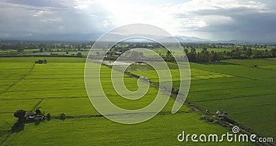Luchtschot Aziatische rijstvelden mooie regenachtige hemel en groene rijstvelden stock videobeelden