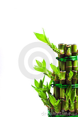 Free Lucky Bamboo Royalty Free Stock Photo - 1807895