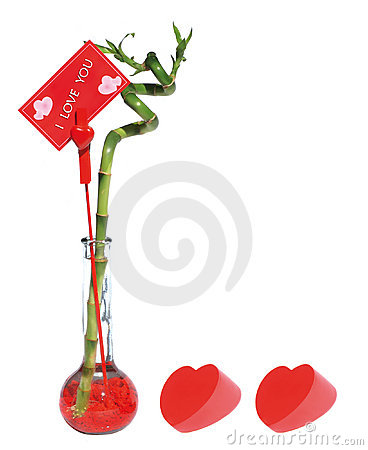 Free Lucky Bamboo For Lover Stock Photo - 2494060