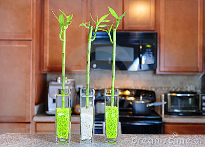 Lucky bamboo plants in the kitchen