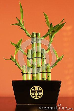 Lucky bamboo on the shelf