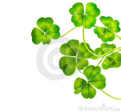 Free Lucky Clovers Stock Photography - 13333732