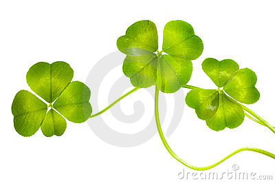 Lucky Clovers Pattern