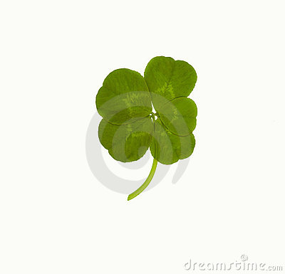 Lucky Five Leaf Clover