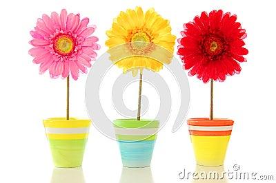 Lucky flowers