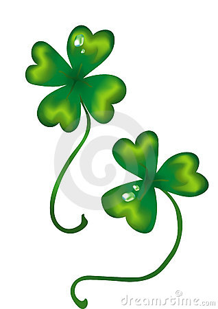 Lucky four-leafed green clover isolated on white