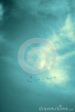Free Lucky No. Birds Flying In Sky, Black Royalty Free Stock Photo - 62444015