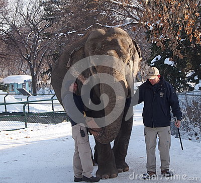 Lucy The Elephant With Trainers Editorial Stock Photo
