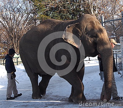 Lucy The Elephant With Trainers Editorial Image