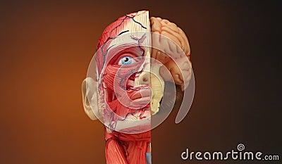 Ludzka anatomia - HD zbiory wideo
