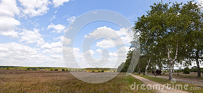 Lueneburger Heath Panorama