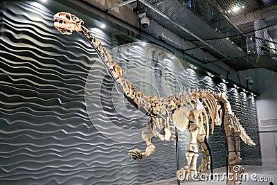 Lufengosaurus Magnus