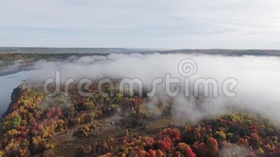 Luftsicht auf einen hellen Herbstwald in dichtem Nebel am Ufer eines ruhigen Flusses stock footage