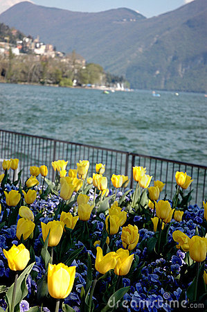 Free Lugano, Flowers On The Lake Stock Photo - 1347140