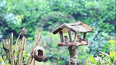 Lugar de alimentação da casa do pássaro no jardim vídeos de arquivo