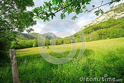 Lugar rural verde al resto