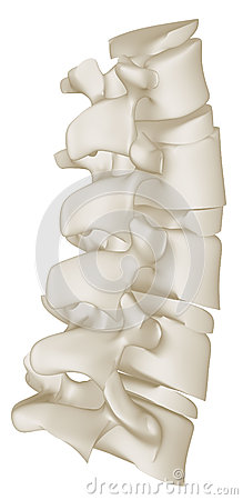 The Lumbar Curve of the Human Spine