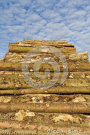 Lumber stack