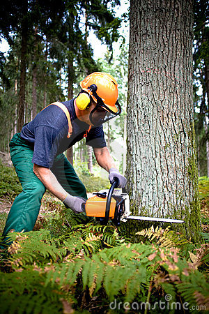 Free Lumberjack Stock Photography - 11316242