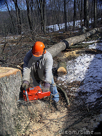 Free Lumberjack Cutting Trees Stock Photo - 938680