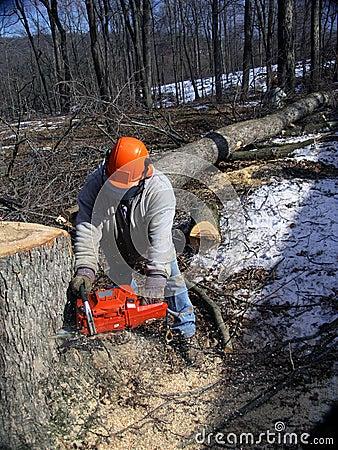 Lumberjack cutting trees