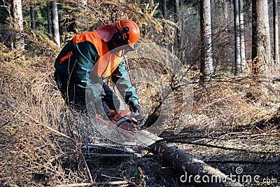 Lumberjack, forest work