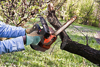 Lumberjack pruning with a chainsaw