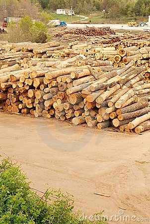 Lumberyard with stacks of logs