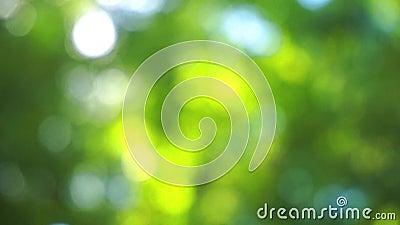 Lumière du soleil de Bokeh brillant par des feuilles banque de vidéos