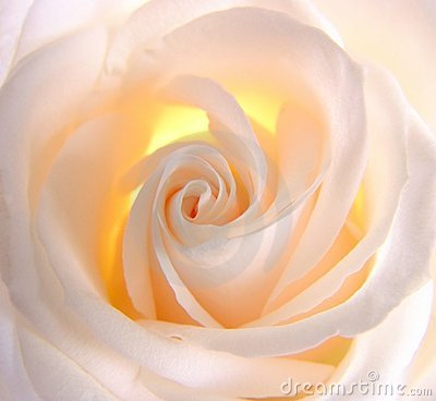 Free Luminous Rose Stock Photography - 597822