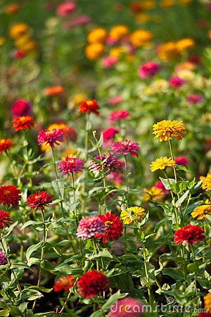 Lumphini Park, Flowers.