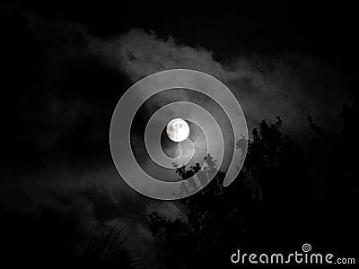 Luna - belleza de la noche