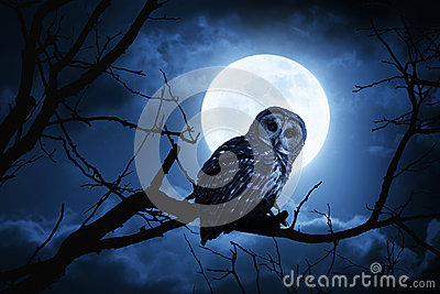 Luna piena di Owl Watches Intently Illuminated By sulla notte di Halloween