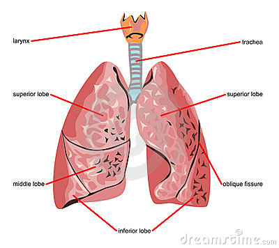 Lung parts