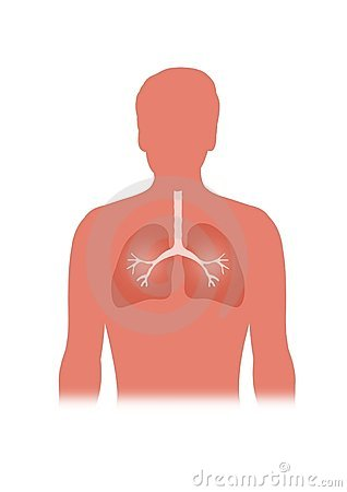 Free Lungs Stock Image - 2171651