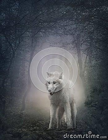 Lupo bianco