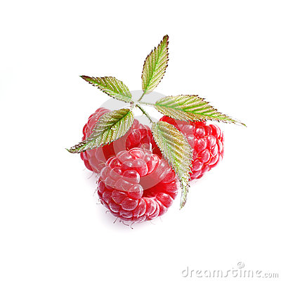 Luscious ripe red raspberries