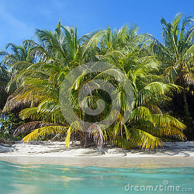 Lush coconut trees on the beach