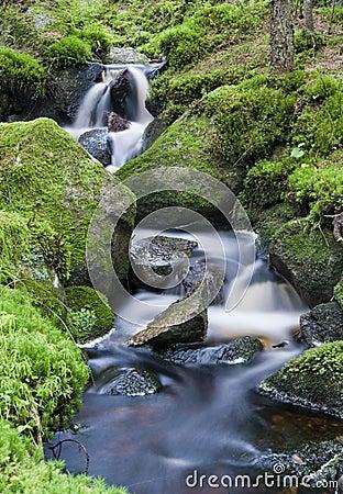A lush creek