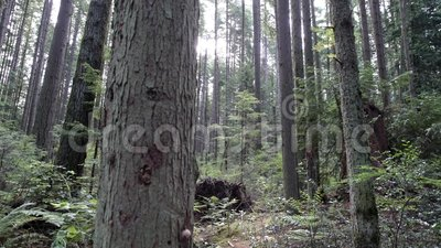 Lush Forest Pacific Northwest 4K UHD акции видеоматериалы