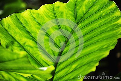 Lush Green Leaves