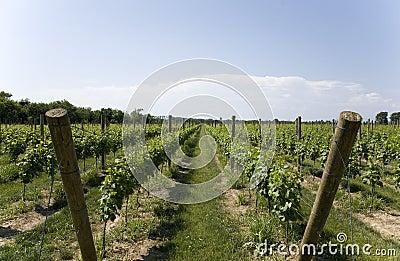 Lush Green Winery