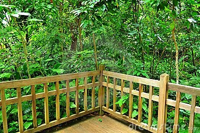 Lush greenery behind wooden fence