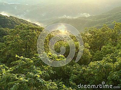 Lush Japanese Mountainscape