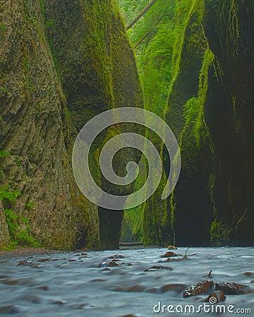 Lush narrow canyon