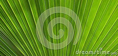 Lush palm leaf