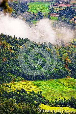 Lush Tibetan landscape